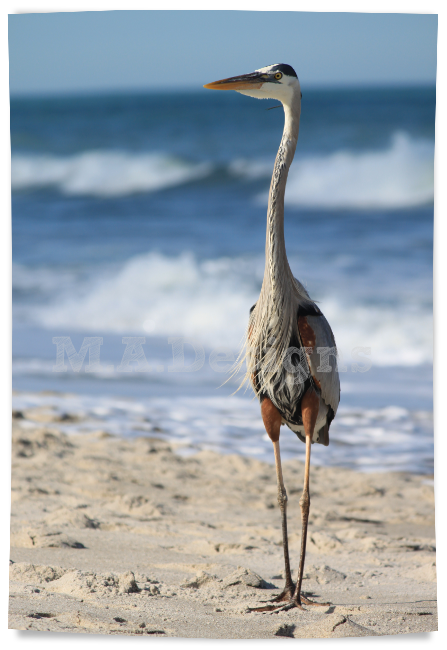 beach bird picture